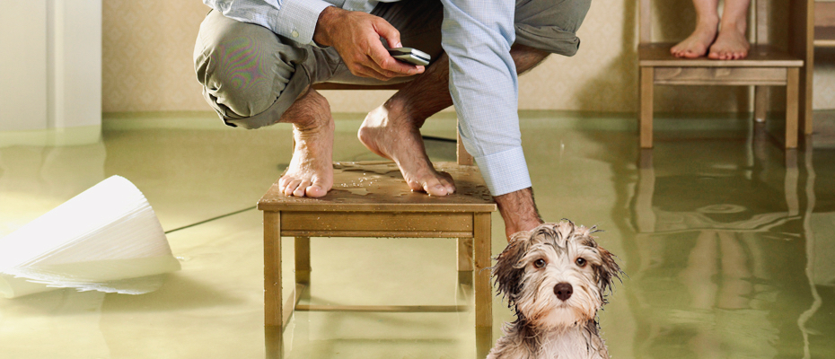 Unhappy dog in flooded home